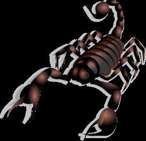 scorpion-23158_1280 (2)
